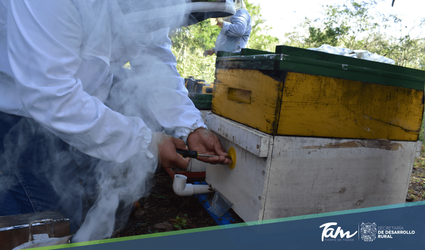 GobTam urges beekeepers to take advantage of the hive areteo subsidy